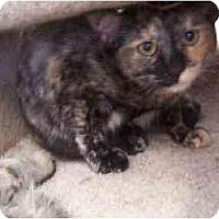 Adopt A Pet :: Zinnia - El Cajon, CA