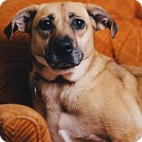 Adopt A Pet :: Viviana - Portland, OR