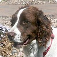 Adopt A Pet :: Skippy - Minneapolis, MN