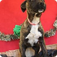 Adopt A Pet :: Pristine - Waldorf, MD