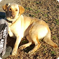 Adopt A Pet :: Sam Adoption pending - East Hartford, CT