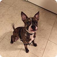 Adopt A Pet :: Oscar Felix - various cities, FL