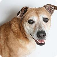 Adopt A Pet :: Laverne - Redding, CA