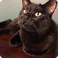 Adopt A Pet :: Faelyn - Santa Ana, CA