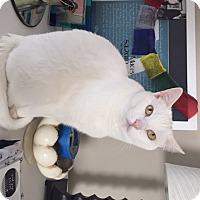 Adopt A Pet :: Myko - Herndon, VA