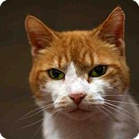 Adopt A Pet :: AVIT - Louisville, KY