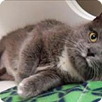 Adopt A Pet :: Marina - Topeka, KS