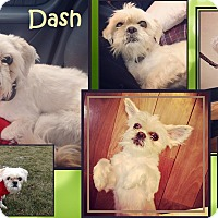 Adopt A Pet :: Dash - Cambridge, ON