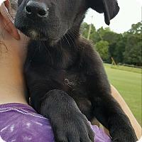 Adopt A Pet :: YVETTE - East Windsor, CT