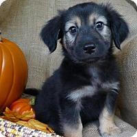 Adopt A Pet :: JustinLee - Alpharetta, GA