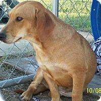Adopt A Pet :: Sugar - Mexia, TX