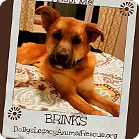 Adopt A Pet :: BRINKS - Lincoln, NE