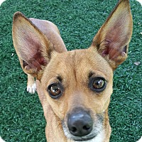 Chihuahua/Dachshund Mix Dog for adoption in Chula Vista, California - Ginger