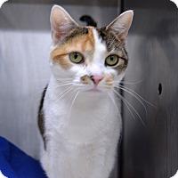 Adopt A Pet :: Charlotte - Wheaton, IL