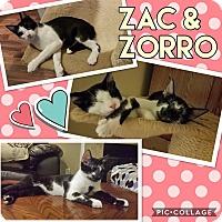 Adopt A Pet :: Zorro - Keller, TX