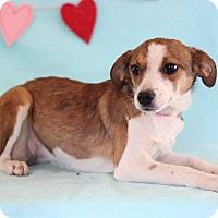 Adopt A Pet :: Joseline - Waldorf, MD