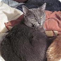 Adopt A Pet :: Tatiana - Los Angeles, CA