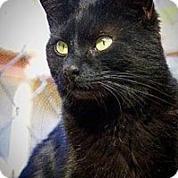 Adopt A Pet :: Mistletoe - Tucson, AZ