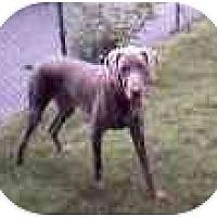 Adopt A Pet :: CHARLIE - Attica, NY