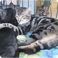 Adopt A Pet :: Jake - Los Alamitos, CA