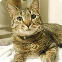 Adopt A Pet :: Zippy - Reston, VA