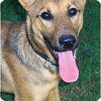 Adopt A Pet :: Skylar - Orange Park, FL