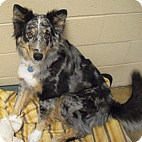 Adopt A Pet :: Rose - Wickenburg, AZ