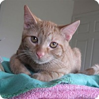 Adopt A Pet :: Nathan - Wilmington, IL