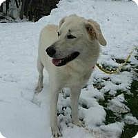 Adopt A Pet :: Suzy in Maine! - Ascutney, VT