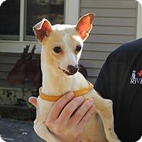 Adopt A Pet :: Jamie reduced! - Harrisonburg, VA