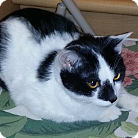 Adopt A Pet :: Grimsby - Colmar, PA