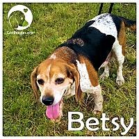 Adopt A Pet :: Betsy - Novi, MI
