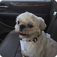 Adopt A Pet :: kobe - La Quinta, CA