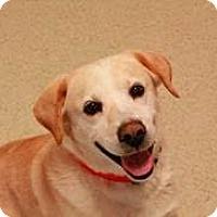 Adopt A Pet :: Mulberry - Manhasset, NY