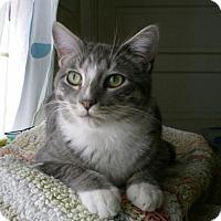Adopt A Pet :: Gordon - Hermosa Beach, CA