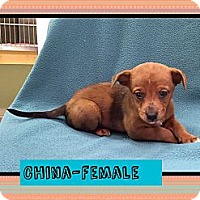 Adopt A Pet :: China - Spring Valley, NY