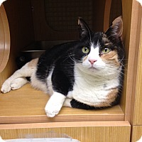 Adopt A Pet :: Taffy - East Meadow, NY
