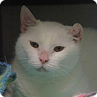 Adopt A Pet :: Ester - New Rochelle Humane, NY
