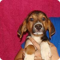 Adopt A Pet :: Macintish - Oviedo, FL