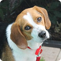 Adopt A Pet :: Peanut II - Tampa, FL
