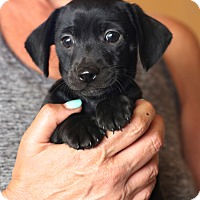 Adopt A Pet :: Sir Walter Raleigh~adopted! - Glastonbury, CT