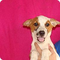 Adopt A Pet :: Nacho - Oviedo, FL