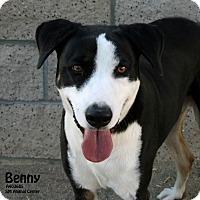 Adopt A Pet :: Benny - Santa Maria, CA