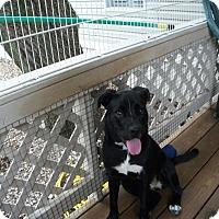 Adopt A Pet :: Darlene - Tallahassee, FL