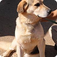 Adopt A Pet :: J-LUCAS - McDonough, GA
