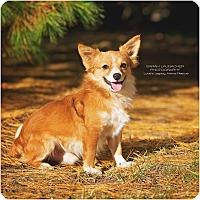 Adopt A Pet :: Fez - Cincinnati, OH