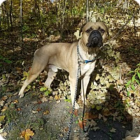 Adopt A Pet :: Duke - Maybrook, NY