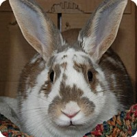 Adopt A Pet :: Gwen - Fairport, NY