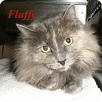 Adopt A Pet :: Fluffy - El Cajon, CA