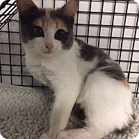 Adopt A Pet :: Angela - Forest Hills, NY